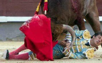Lama de Góngora ha sido volteado sin consecuencias hoy en su presentación en Madrid. (FOTO: las-ventas.com)