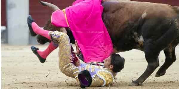 La voltereta de Nazaré esta tarde en Las Ventas que le ha provocado la grave lesión de ligamentos de la rodilla derecha. (FOTO: las-ventas.com)