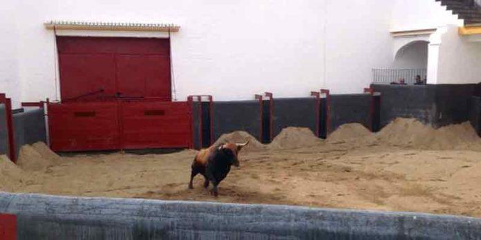 Corral de reconocimiento veterinario de la plaza de Sevilla.