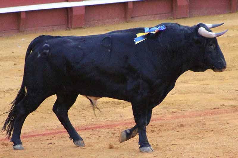 El quinto (Javier Molina).