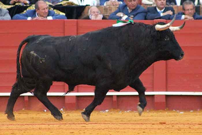 El quinto toro de Juan Pedro Domecq.
