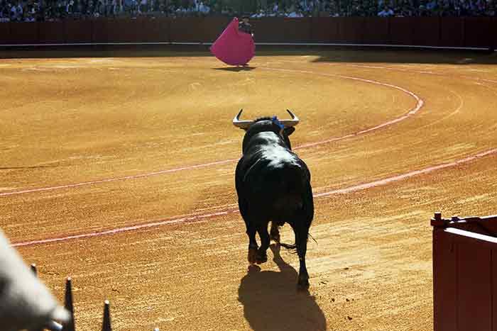 El primero de la ganadería de Torrestrella sale por toriles.