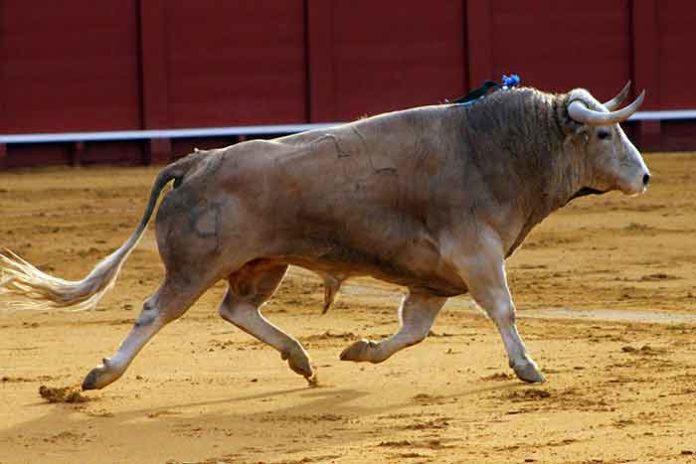 Toro de Cayetano Muñoz lidiado en la pasada Feria de Abril. (FOTO: Javier Martínez)