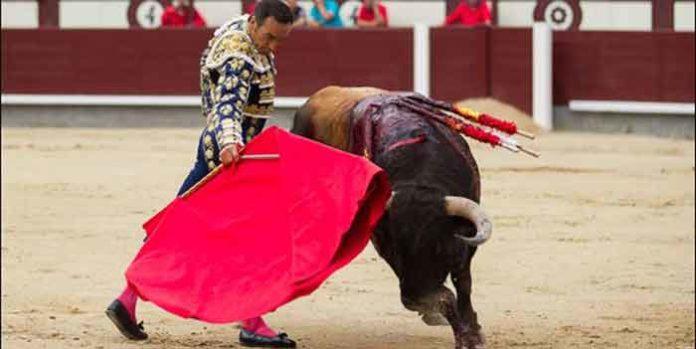 El Cid, con su primer toro hoy en Madrid. (FOTO: las-ventas.com)