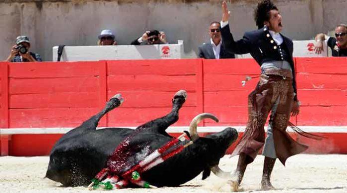 Alegría de Ventura al rodar el toro sin puntilla hoy esta mañana en Nimes. (FOTO: Roland Costedoat/Mundotoro)