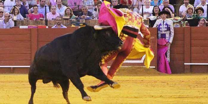 Momento de la tremenda voltereta de Pablo Aguado en el sexto novillo el pasado jueves en Sevilla. (FOTO: Javier Martínez)