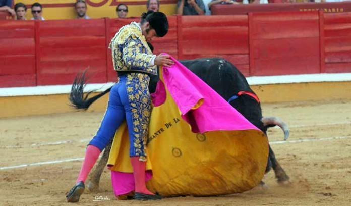 El excelente toreo de capote de Morante en Badajoz. (FOTO: Gallardo / badajoztaurina.com)