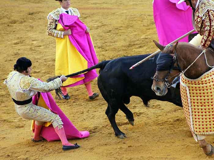 Morante, coleando al toro.