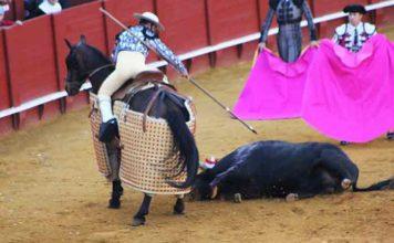 El picador, con un toro derrumbado al que no poder picar.