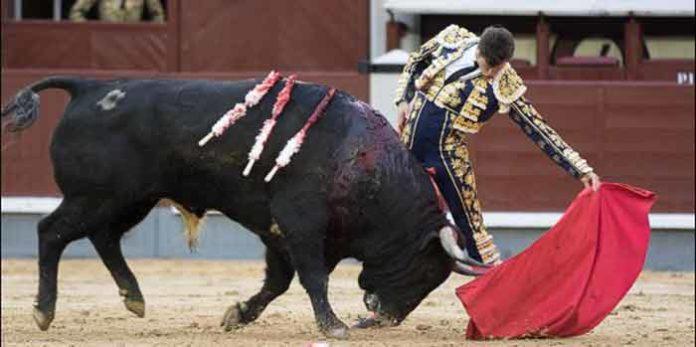 Daniel Luque, hoy en Madrid. (FOTO: las-ventas.com)