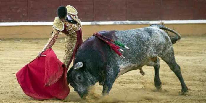 Esaú Fernández, con el 'miura' en Tudela.