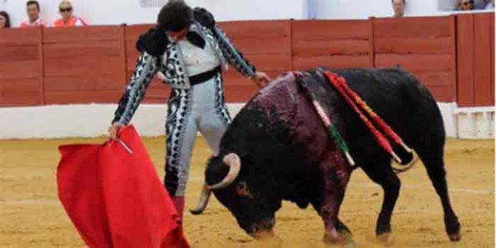 Morante toreando hoy sábado en Zafra. (FOTO: Gallardo / Badajoz Taurina)