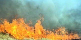 Las llamas en los cercados de la ganadería de Partido de Resina.